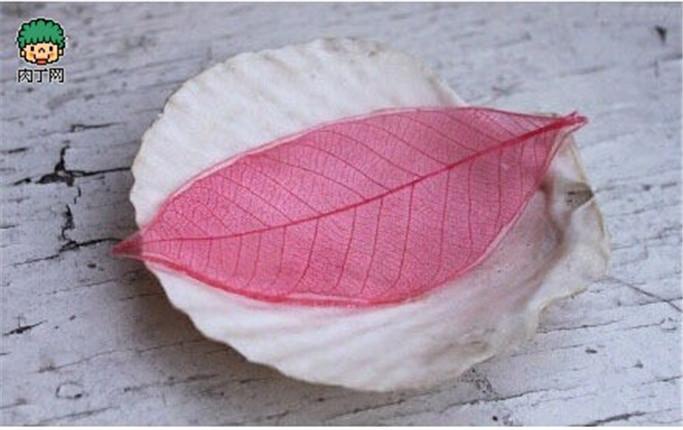 1.叶子。一般以常绿木本植物为好。如桂花叶、石楠叶、木瓜叶、桉枝叶、茶树叶、玉兰叶等。2.氢氧化 叶脉书签(8张)钠。3.无水碳酸钠。4.烧杯。5.铁架台。6.酒精灯。7.毛质柔软的旧牙刷。8.玻璃板(刷叶脉时垫)所选的用作书签的叶子要符合两大要求:1、叶脉为网状脉。横向脉如银杏树叶、针形叶如松针均不可取。2、叶脉清晰、完整,这样才能确保叶脉不会与叶肉一起被腐蚀烂,也减少去除叶肉时叶脉被刷断的发生率。 一、快速制作方法1.